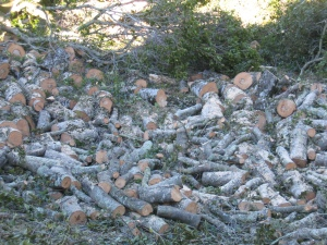 firewood remnants of fallen tree
