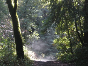 trail inthe mist