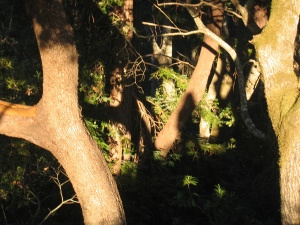 mystery shadow in the trees