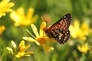 Butterfly copyright (c) Kathy J Loh